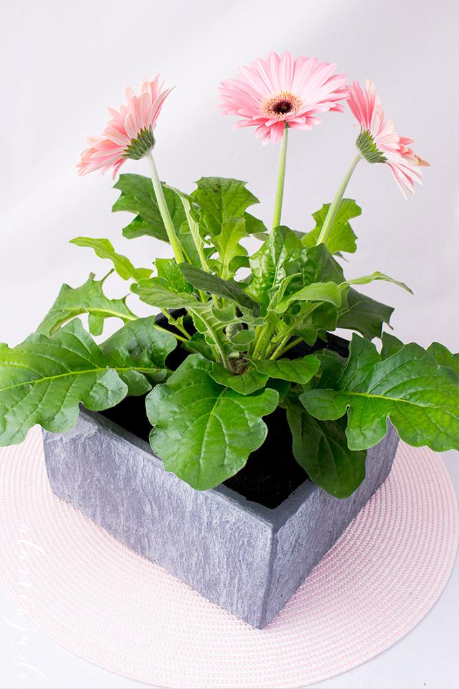 me and my flowers mit blumentopf24 alaminja 39 s blog. Black Bedroom Furniture Sets. Home Design Ideas